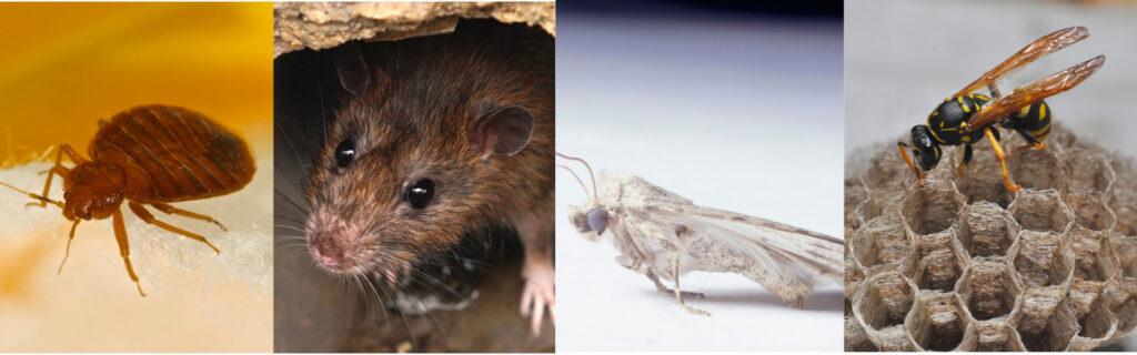 Pest Control islington